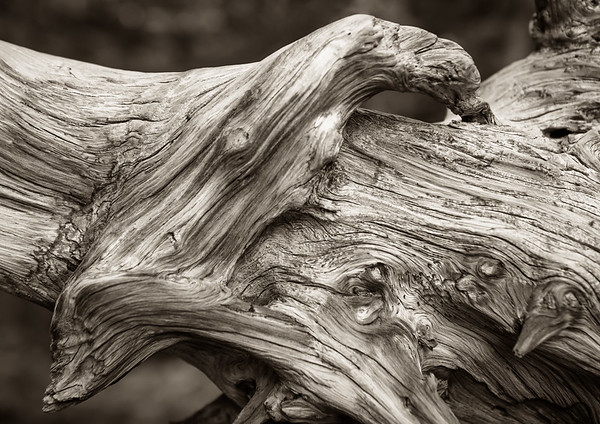 Downed Tree, Rocky Mountain NP