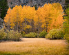 Aspens, North Lake Rd.