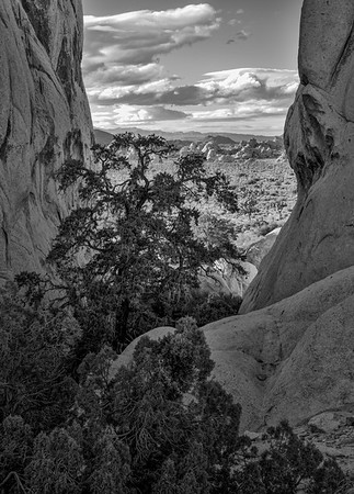 Joshua Tree Overlook