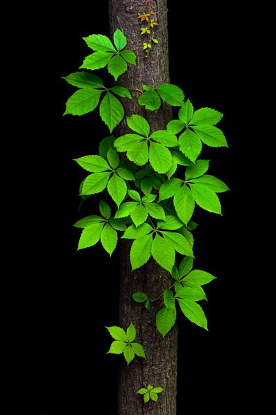 Tree Decor