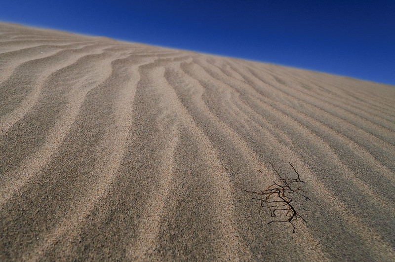 Dune to Blue