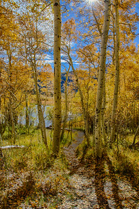 Eastern Sierras Fall Color