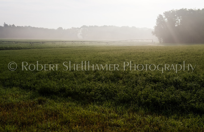 Midwestern Summer Morning