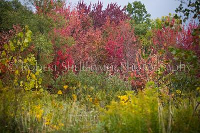 Fall Palette