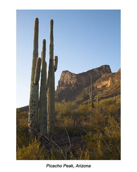 Picacho Peak State Park, Arizona with Saguaro Cactus in foreground at Sunrise. March 25, 2007