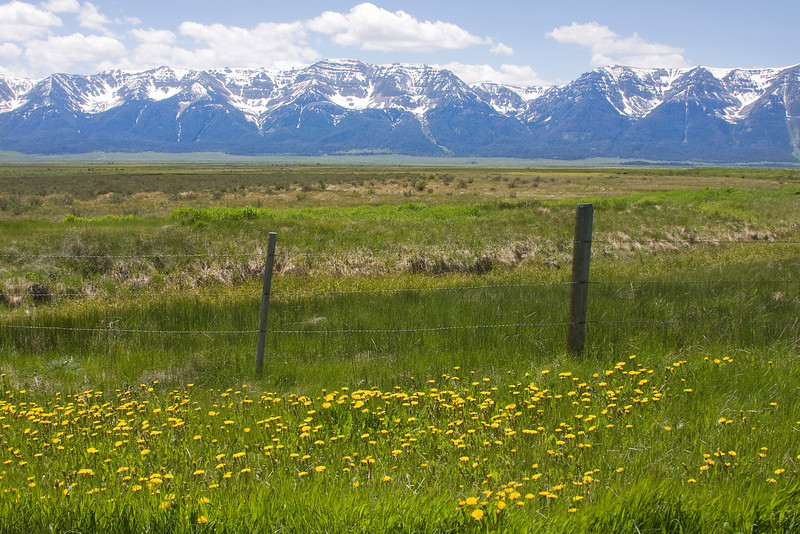 West Centennial Mountains in Montana, looking across Upper Red Rock Lake in the Red Rock Lakes National Wildlife Refuge. Dandelions in front. June 20, 2009.