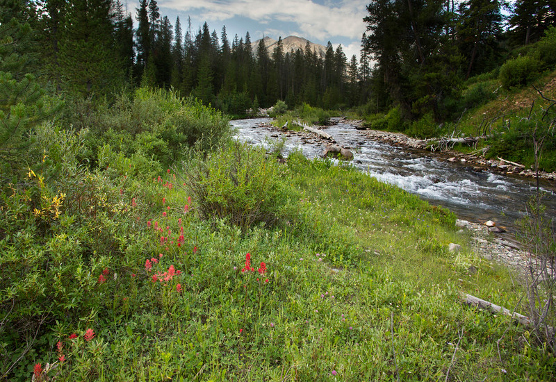 Taylor Creek and Indian Paintbrush, MT
