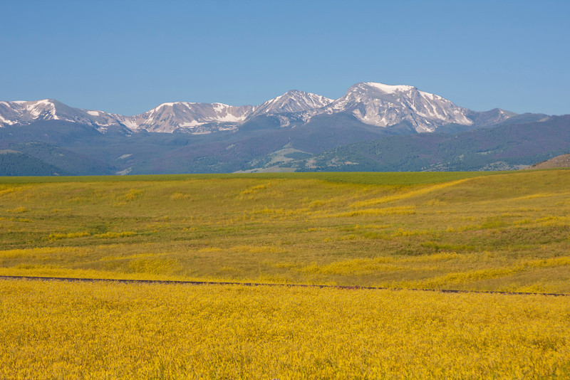 Tobacco Root Mountains and yellow flowers from highway 287 in Montana. July 21, 2010.