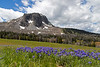 Black Butte and Sky Pilot Wildflowers, Montana