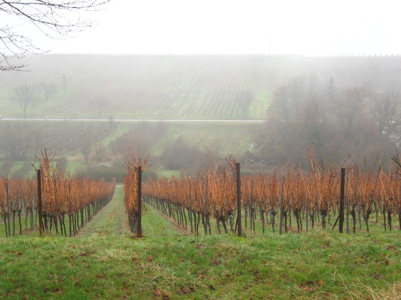 Vineyard along the wein strasse in southern Germany