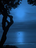 Twilight Tree Dancer
