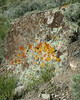 Various lichen on a rock in Red Rock Lakes National Wildlife Refuge, Montana. 2004