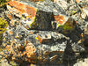 Rocks along the Continental Divide (Montana/Idaho) with lichen. Sep 2007