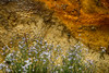 Yellowstone, wildflowers and thermal pool