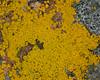 Patterns of Lichen on rock. Idaho. Jun 10, 2009