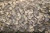Interesting mud patterns in North Carolina swamp.