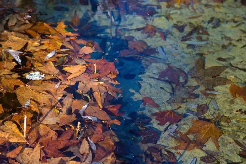 Leaves floating in Lytle Creek, Jan 2013.