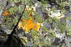 Lichen in Yellowstone