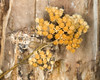 Dried flowers against dead wood at Continental Divide (Idaho and Montana border) May 25, 2009