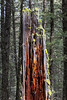 Nature's textures on old log in Targhee National Forest. May 26, 2013