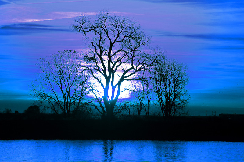 A little change in colors make the sunrise behind this tree look surreal on the lower Mokelumne River at Sunrise in the Sacramento River Delta region. Dec 2012