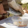 Harvesting eggs from a female Arctic Grayling. Red Rock Creek, MT. May 16, 2012.