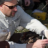 Placing the genetic material in separate containers for the Arctic Grayling project in Red Rock Creek, May 16, 2012.