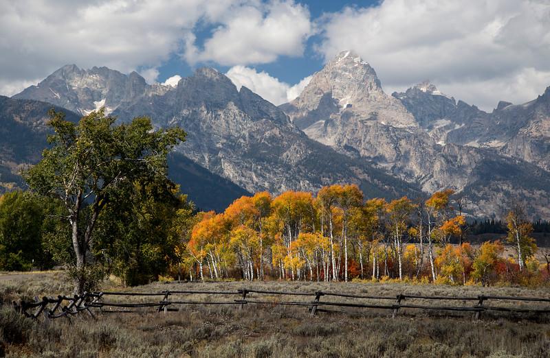 Fall Trees against the Grand Teton
