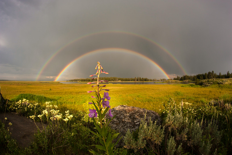 Double Rainbow and Fireweed over Snake River, Idaho