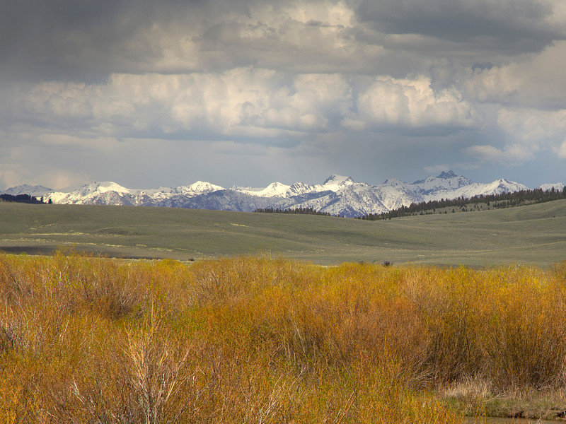 Willows and Madison Range from RRLNWR
