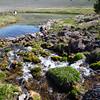 Picnic Springs feeding Culver Pond