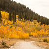 South Centennial Road and Aspens in fall