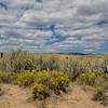 Rabbit Brush, Sand Dunes and Sky