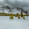 Snow in Winter At Yellowstone