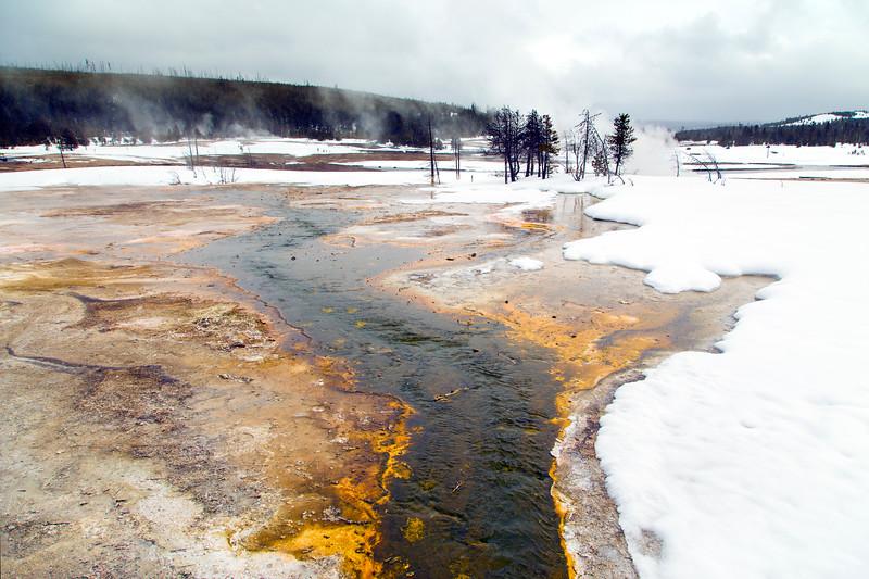 Warm creek in Biscuit Basin