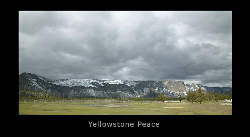 Madison River Valley in Yellowstone National Park with Mount Haynes sunlit in the background.