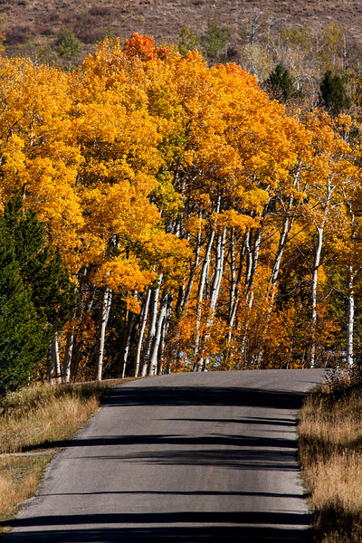 Red Rock Road looking east in fall colors. Sep 2012 Idaho