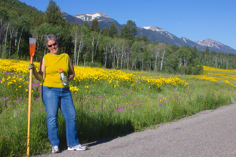 Karen Glenn in front of the profusion of Little Sunflowers blooming across from RedRock RV Park. Centennial Mountains stand in the background. July 16, 2011.