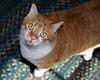 Boomer, RedRock RV Park mascot cat. June 3, 2013