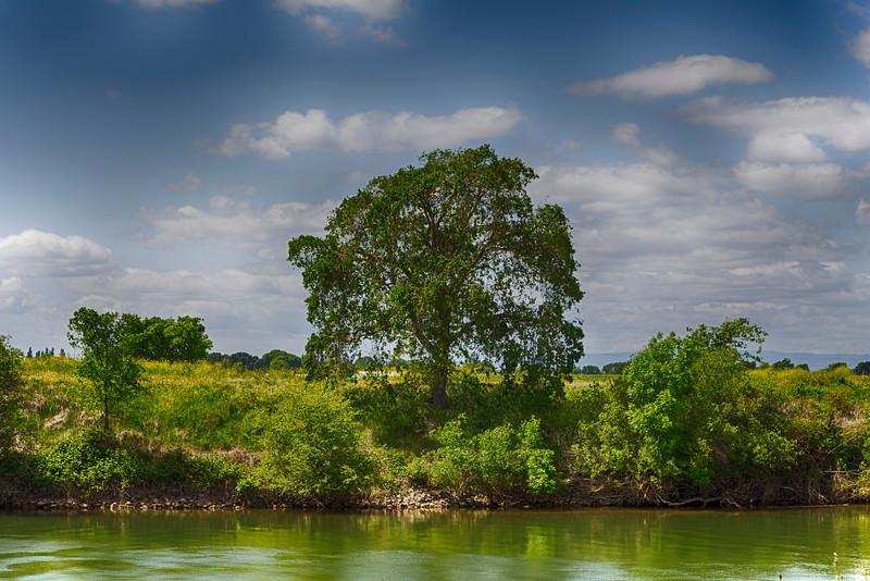 Tree Along Sacramento River