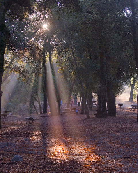 God-beams shining through the Oak Trees at Silent Valley Club, near Banning, California.