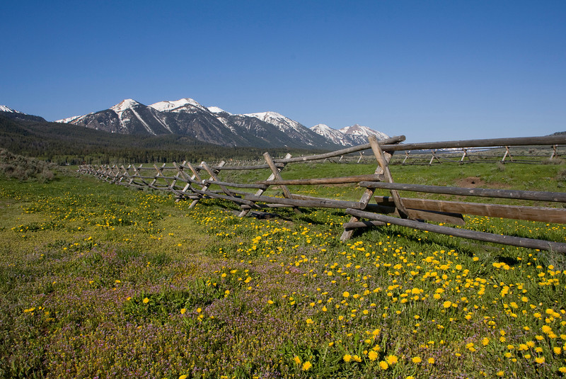 Daisy's and fence with East Centennial Mountains in the background, near Henry's Lake, Island Park, Idaho July 2008