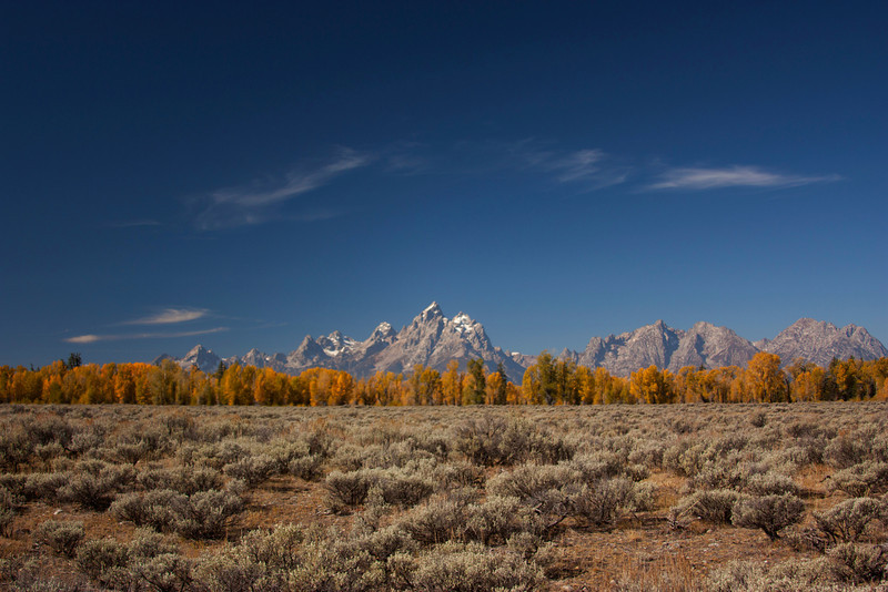 Grant Teton Mountains in Wyoming with fall-colored aspens trees in a line and sagebrush. Sep 25, 2010