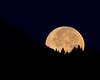 Setting moon and Douglas Firs in Island Park, Idaho, near RedRock RV Park. Sept 3, 2009