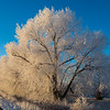 Frosted Trees in Fremont County, Idaho