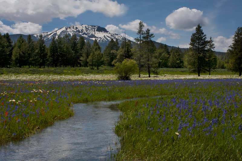 Stream meanders through wildflower filled meadow with Sawtelle Peak in the background along Red Rock Road in Idaho. July, 2011.
