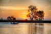 Tree on Lower Molukumne River at Sunrise with boat