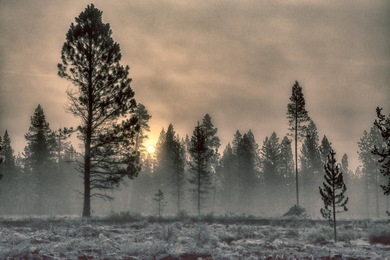 Ice fog in the trees at La Pine, Oregon, October
