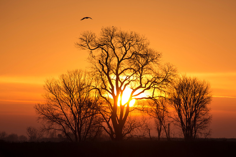 Sunrise and Tree