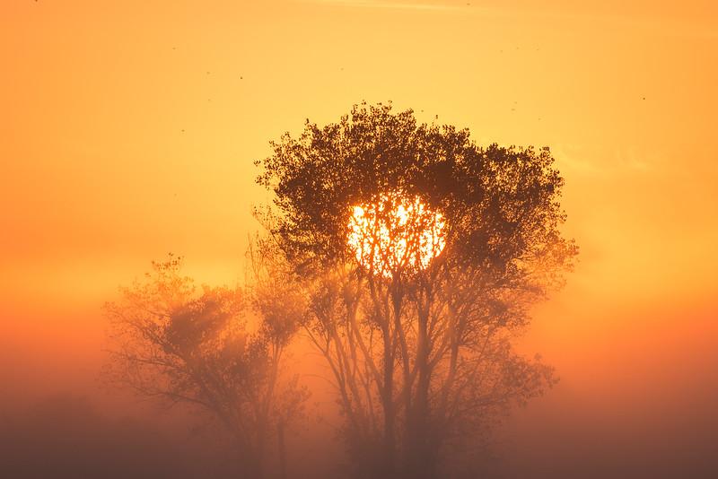 Tree and Mokelumne River at Sunrise. Isleton